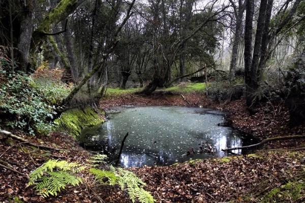 Bosque da Fervenza