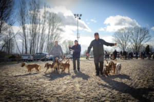 XXXVIII Feria de perros de caza en Camponaraya