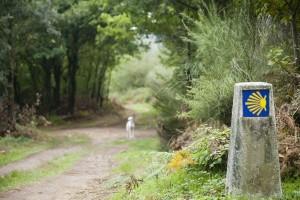 Los Caminos de Santiago como tarjeta de presentación de Galicia: 1,2 M€ en ayudas para actuaciones de mejora paisajística y embellecimiento