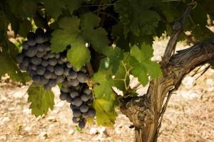 Convocadas ayudas para la promoción del vino gallego en países de fuera de la UE dotadas con 2,1 M€