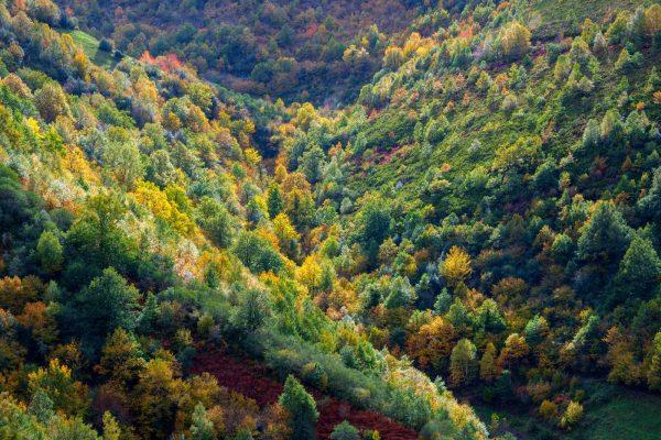 Ayudas para la creación de superficies forestales