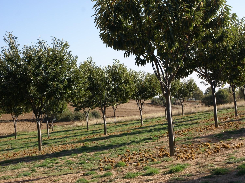 Continúan las jornadas sobre la planificación y el diseño de las plantaciones de castaños que 'visitarán' O Bolo, Folgoso y Chantada, entre otros ayuntamientos