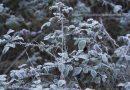 ¿Por qué es importante desbrozar en invierno?