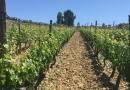 Proyecto de creación de polígonos agrícolas en Valdeorras