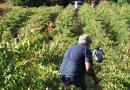 Premiado un documental sobre el vino de Ribeiro y Valdeorras