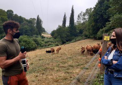 Aldea modelo de Trascastro: sistema basado en el internet de las cosas para la gestión de la ganadería extensiva